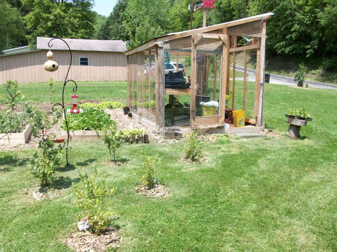 Greenhouse, blueberry bushes and raised beds