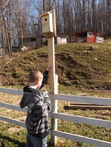 Grandson Nathan hanging Bluebird house