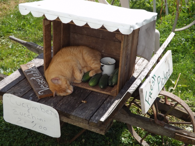 Cat sleeping in Tiny Vegetable Stand