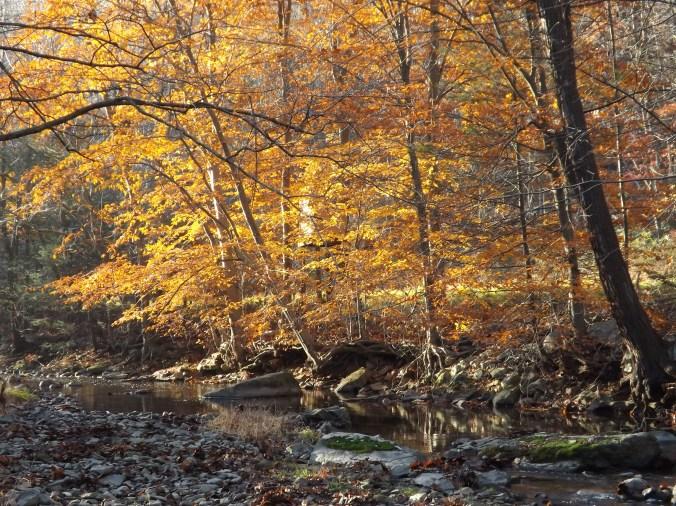 Fall leaves in Juniata County PA